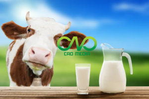 Công bố tiêu chuẩn chất lượng sản phẩm sữa