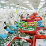 Giấy phép vệ sinh an toàn thực phẩm cơ sở sản xuất thực phẩm tươi sống
